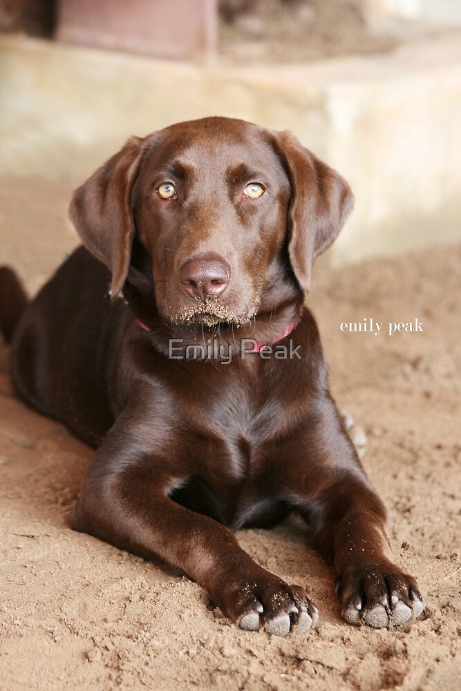 Miss Molly by Emily Peak
