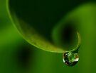 Wave in Green by Ingrid Beddoes