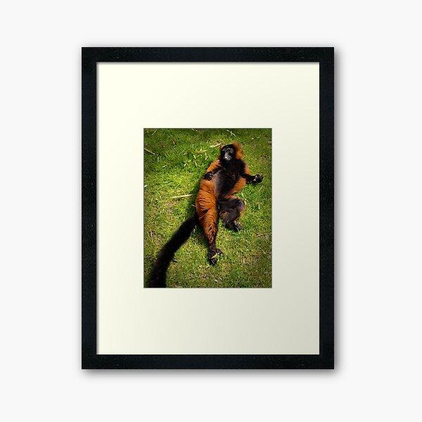 Relaxed Framed Art Print