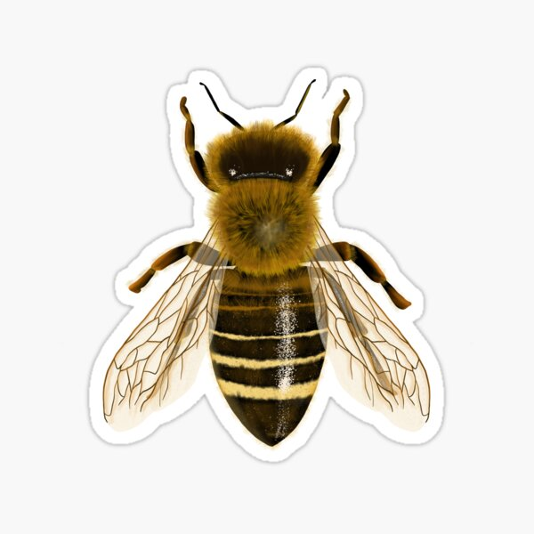 Realistic bee drawing Sticker