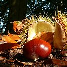 Autumn Windfall by mikebov