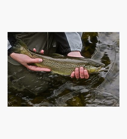 Trout from Dunajec River . Galicia.Poland. Brown Sugar Fly Fishing.Tribute to Robert Redford . Merry Christmas -  Tight  lines ***** Views (569) Thanks ! Photographic Print
