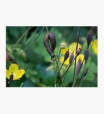 slug dancing on a poppy Photographic Print