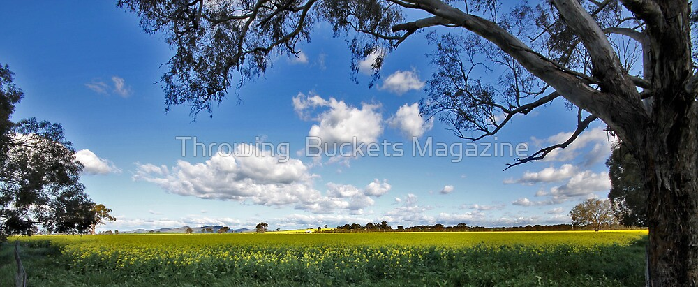 Fields of Gold by Throwing  Buckets Magazine