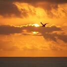 sunrise flight by strypes
