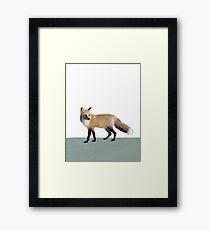 Fox on Sage Framed Print