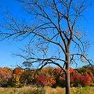 The Lone Tree by Marija