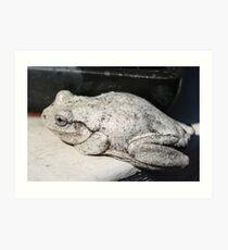 Peron's Tree Frog Art Print