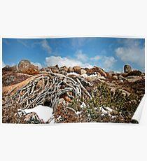 Mt Wellington Tree Roots  Poster