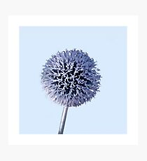 Monochrome - Starry night on the thistle globe Photographic Print