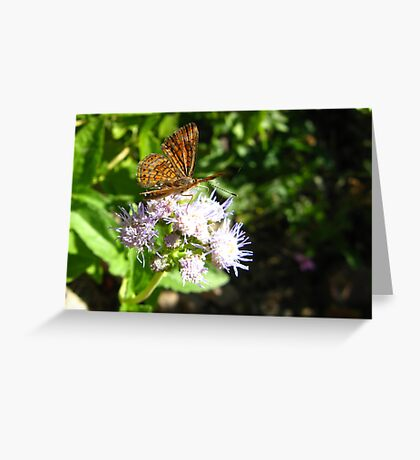 Butterfly ~ Fatal Metalmark Greeting Card