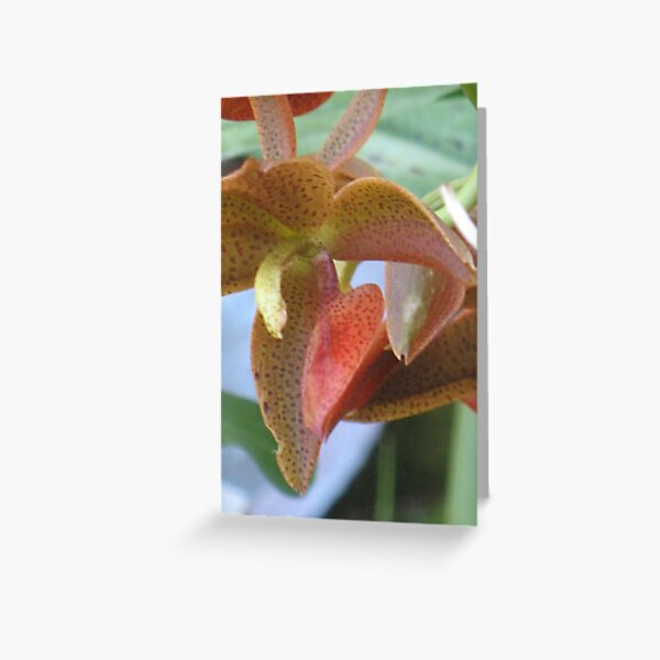 Another new orchid in our Garden of Wonder Greeting Card