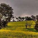 Golden Pastures - Bathurst, NSW Australia - The HDR Experience by Philip Johnson