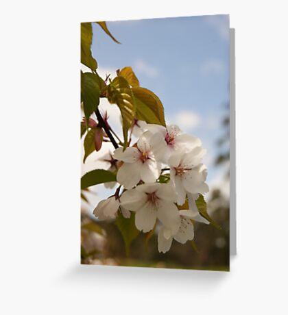 Where Dreams Blossom... Greeting Card