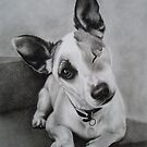 Jack Russell by Peter Lawton