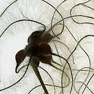 CheveuxD'Ange Detail I by elisabeth tainsh