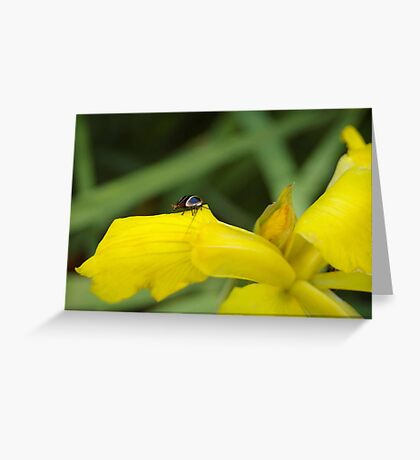 Yellow Iris and tiny cockroach Greeting Card