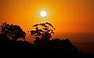 Sunset Silhouette by Helen Vercoe
