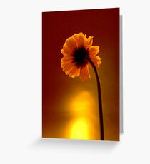 DaisySunrise Greeting Card