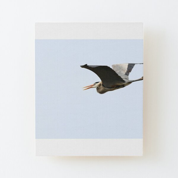 Unhappy Great Blue Heron Wood Mounted Print
