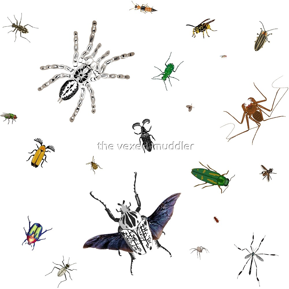 Entomologist's Dream by the vexed  muddler