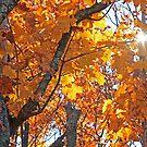 """Autumn Burst of Light"" by MarieR"