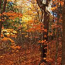 """""""Autumn Glimpse Through The Woods"""" by MarieR"""