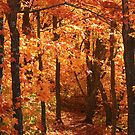 """""""Autumn Canopy of Color"""" by MarieR"""