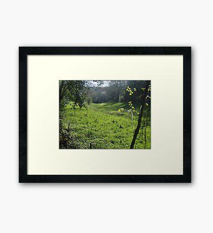 A walk in the meadow Framed Print