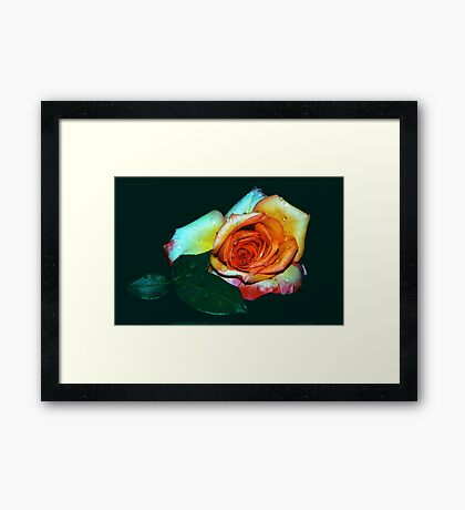 PASSION EXPOSURE Framed Print
