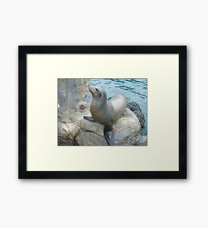 A seal of approval Framed Print