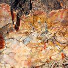 Petrified Wood by Chappy