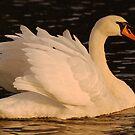 Swan 2 by Alexa Pereira