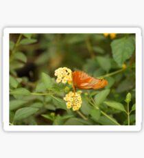 Julia Butterfly on Flower Sticker