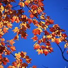 """""""Autumn Leaves"""" by MarieR"""