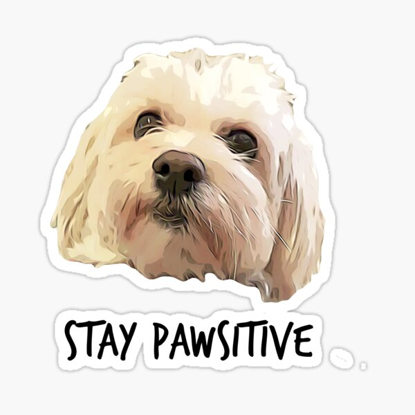 Stay Pawsitive Sticker