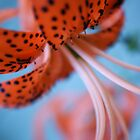 A Lily is Known by it's Spots by Ami  Wilber-Mosher