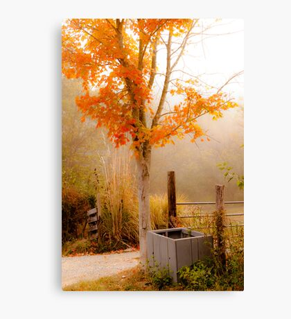 Burst of Orange Canvas Print