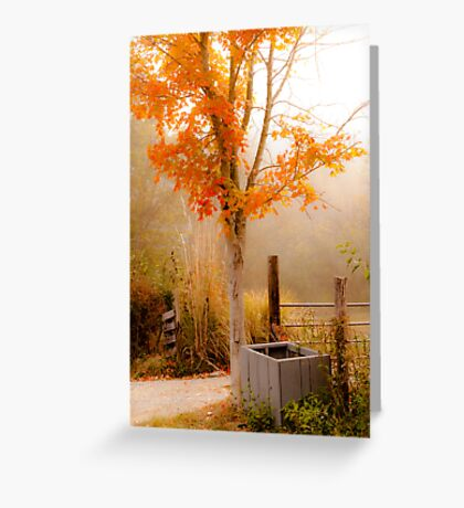 Burst of Orange Greeting Card
