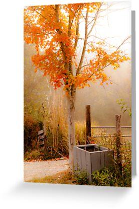 Burst of Orange by Jeanne Sheridan