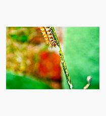 The Hungry Little Caterpillar.. Photographic Print
