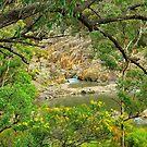 Boonoo Boonoo Falls by Penny Smith