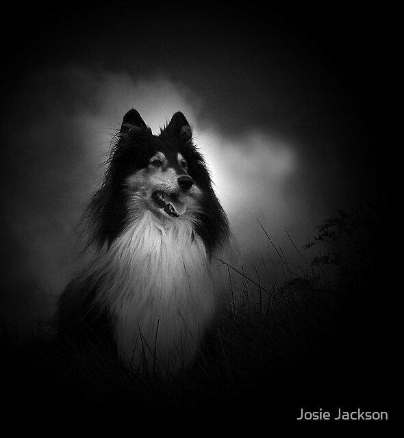 Always Alert by Josie Jackson