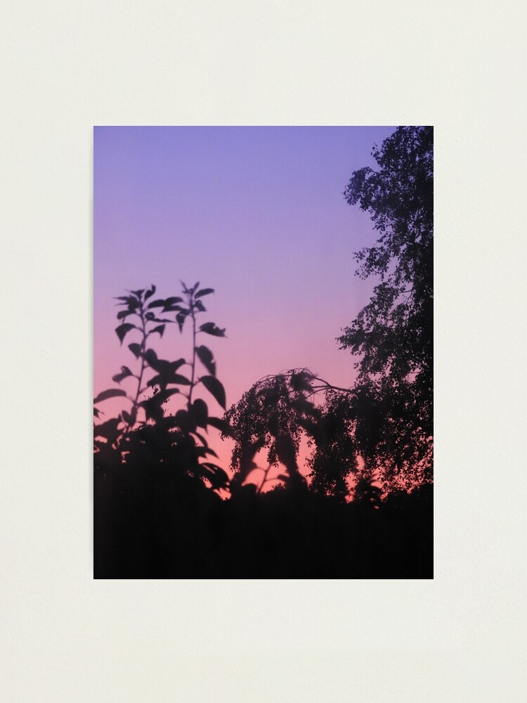 Alternate view of Sunset in the trees Photographic Print
