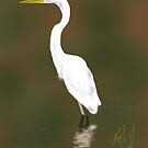 Egret - Sketched on iPad by Ray Cassel