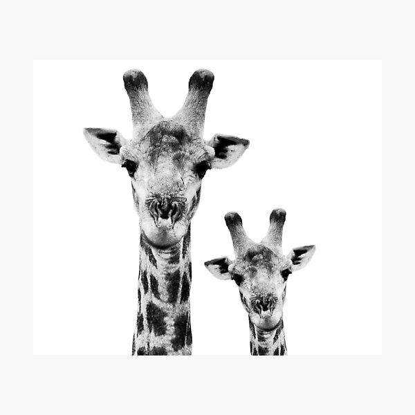 SAFARI PROFILE - GIRAFFES WHITE EDITION Photographic Print
