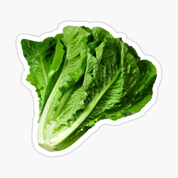 Lettuce Sticker