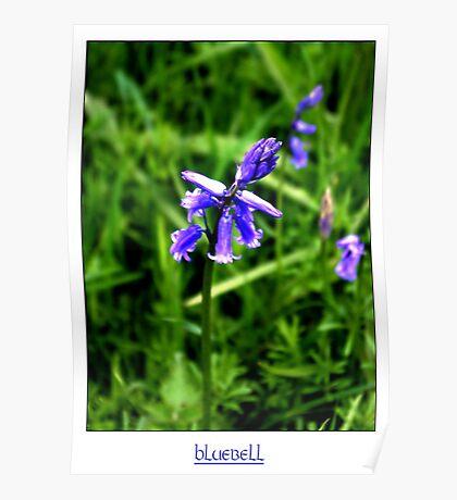 Bluebell #2 Poster