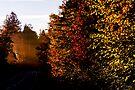 October morning, #3 by Ronny Falkenstein