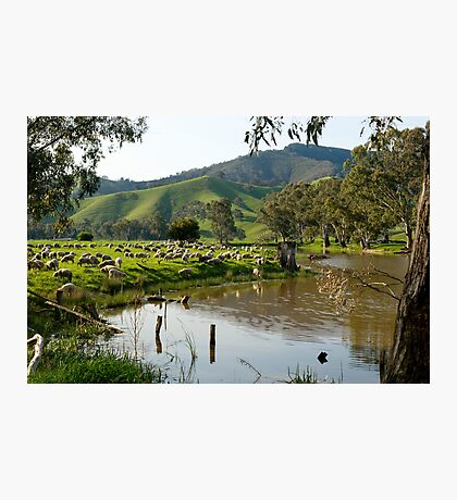 Sheep Country - Victorian Alps Photographic Print